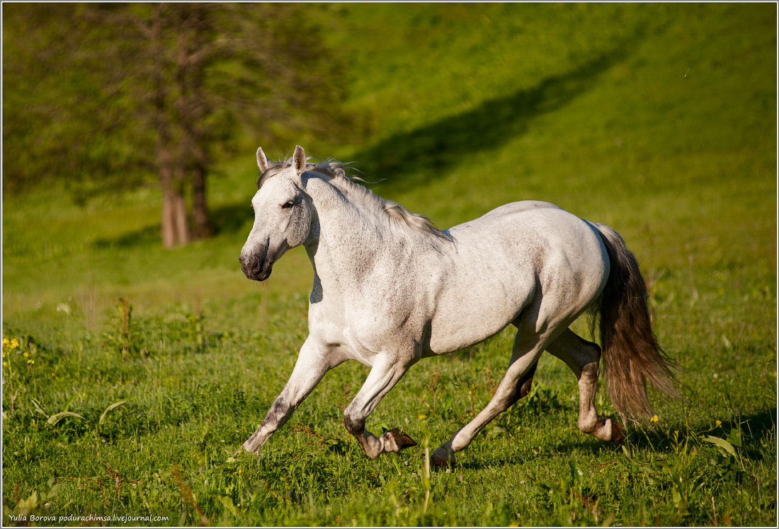 Karachay–Cherkess Republic: A territory of enchanting horses - 30
