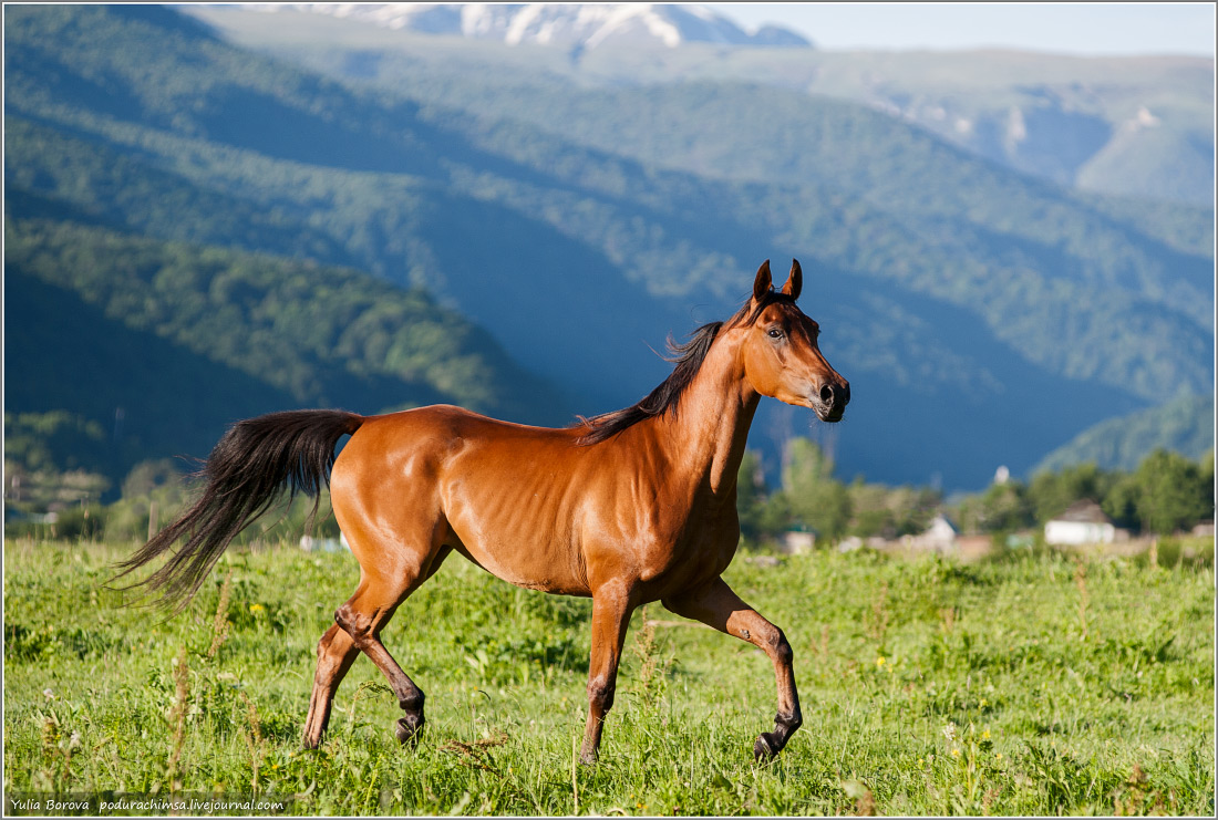 Karachay–Cherkess Republic: A territory of enchanting horses - 32