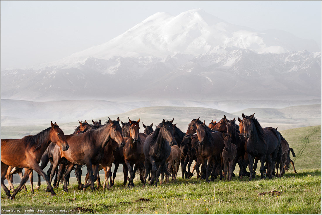 Karachay–Cherkess Republic: A territory of enchanting horses - 34