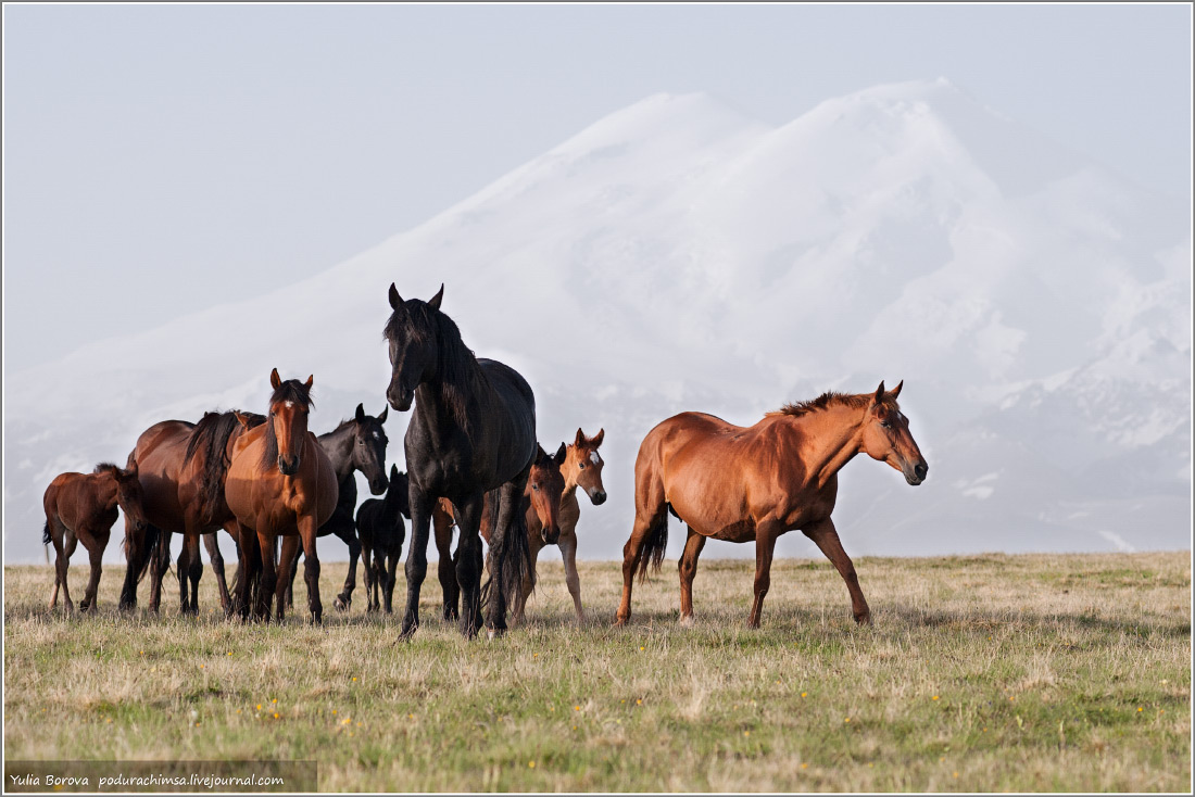 Karachay–Cherkess Republic: A territory of enchanting horses - 36