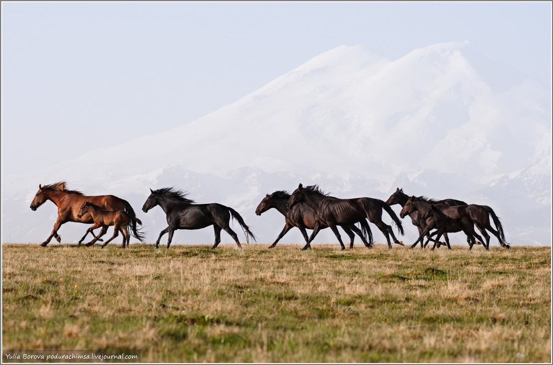 Karachay–Cherkess Republic: A territory of enchanting horses - 37