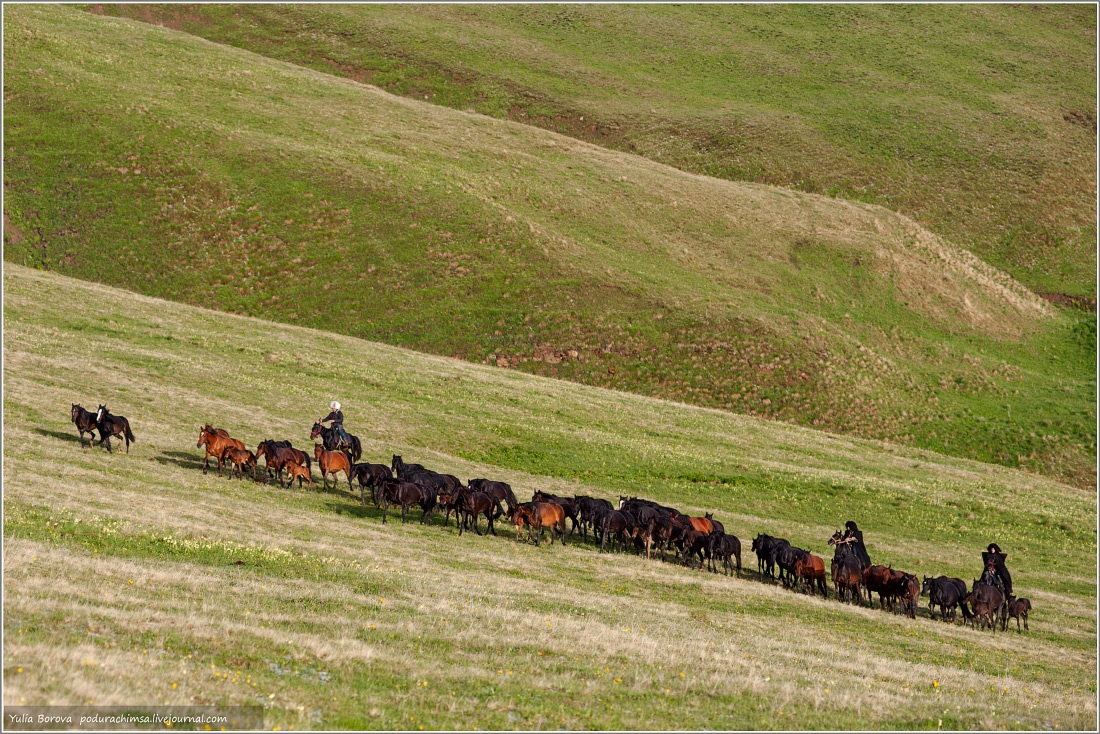 Karachay–Cherkess Republic: A territory of enchanting horses - 39
