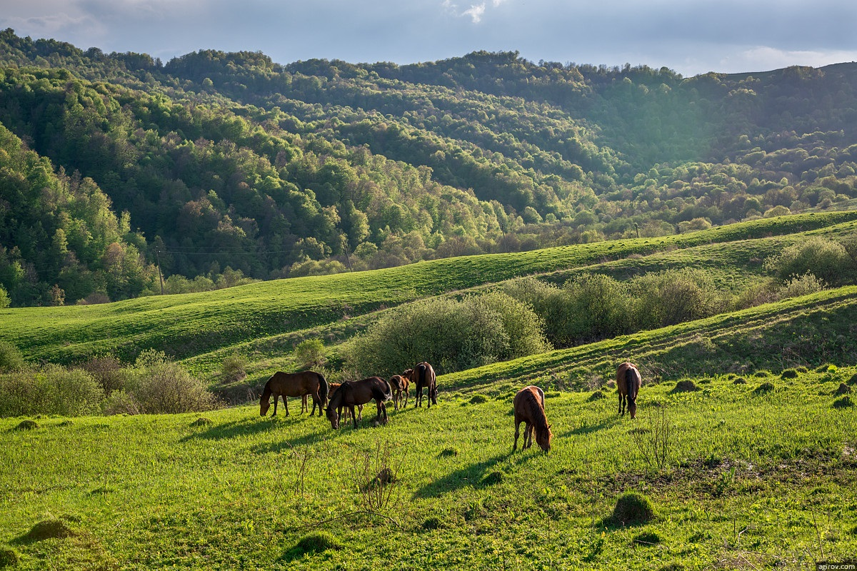 Nature of Ingushetia: Picturesque landscapes of the Republic - 31