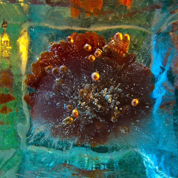 Ice and flowers: Nice frozen still-life photography by Vasilij Cesenov - 38