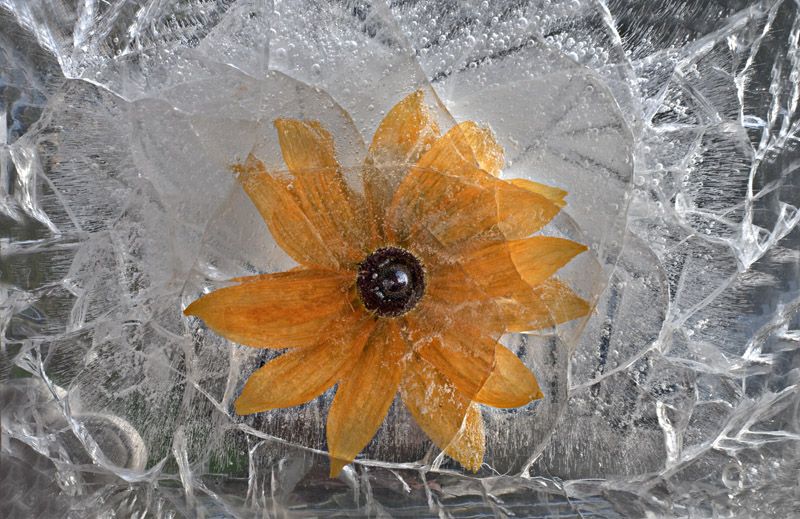 Ice and flowers: Nice frozen still-life photography by Vasilij Cesenov - 66