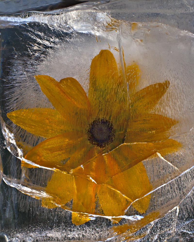 Ice and flowers: Nice frozen still-life photography by Vasilij Cesenov - 68