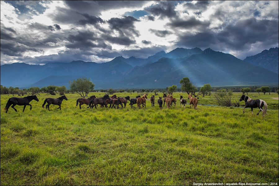 Republic of Buryatia: Wild landscapes and horses of Transbaikalia - 05