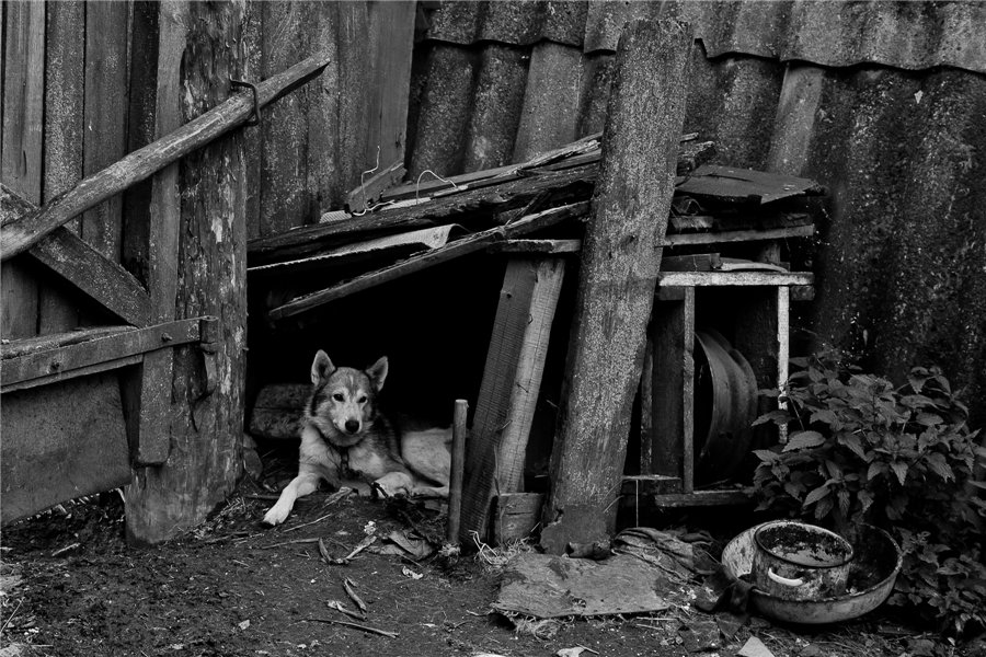 Photo project Forgotten Russia: Forlorn and dying villages - Osinki - 05