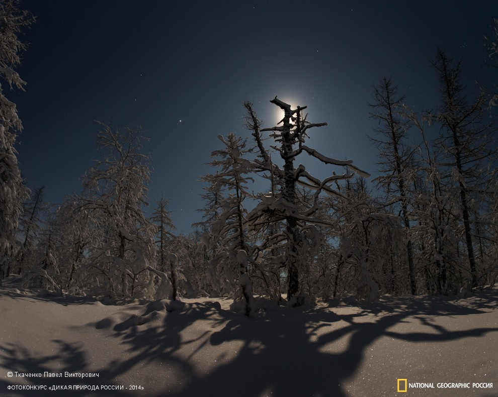 National Geographic: Photo contest Wild Nature of Russia 2014 - Part 1 - 27