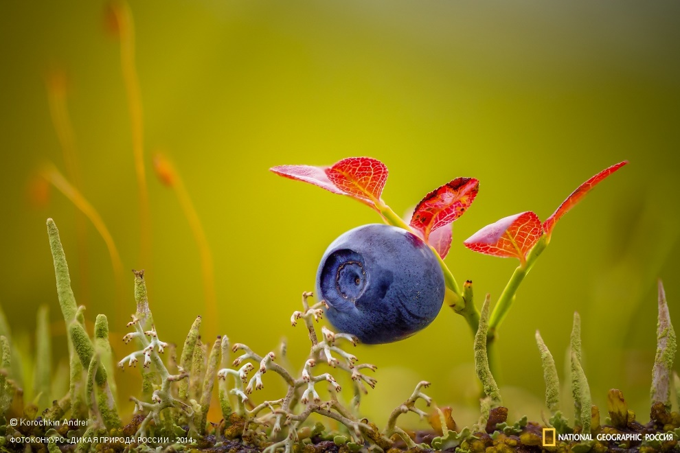National Geographic: Photo contest Wild Nature of Russia - Part 2 - 26