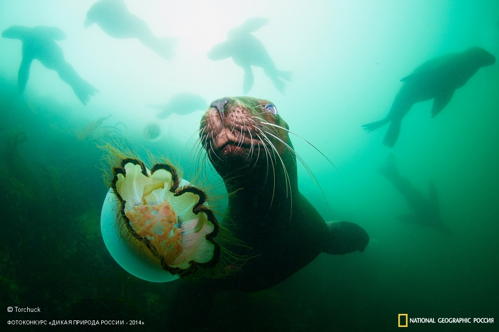 National Geographic: Photo contest Wild Nature of Russia - Part 2 - 27