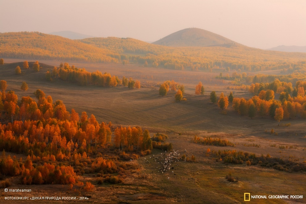 National Geographic: Photo contest Wild Nature of Russia - Part 2 - 60