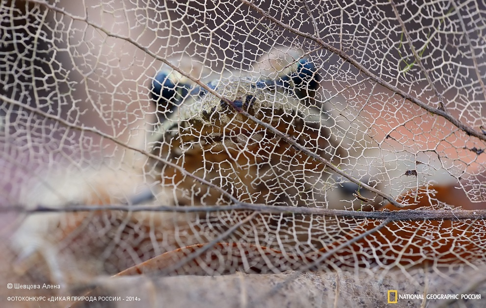 National Geographic: Photo contest Wild Nature of Russia - Part 2 - 71